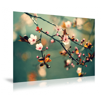 Fotoafdruk - Mat